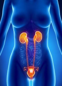 La candidose urinaire permet parfois de mettre en avant une candidose plus avancée.