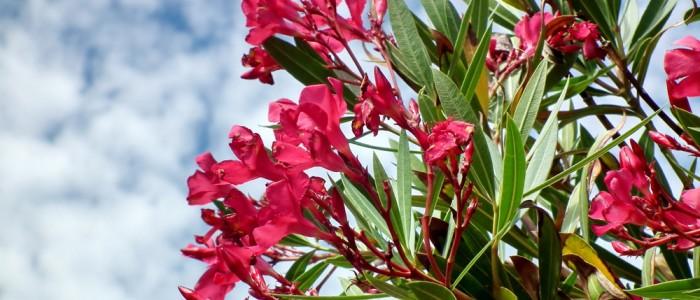 les-plantes-pour-lutter-contre-la-candidose