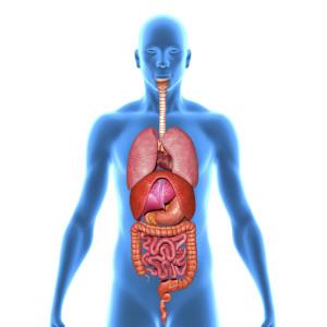 La candidose digestive attaque un ou plusieurs éléments de votre système digestif...